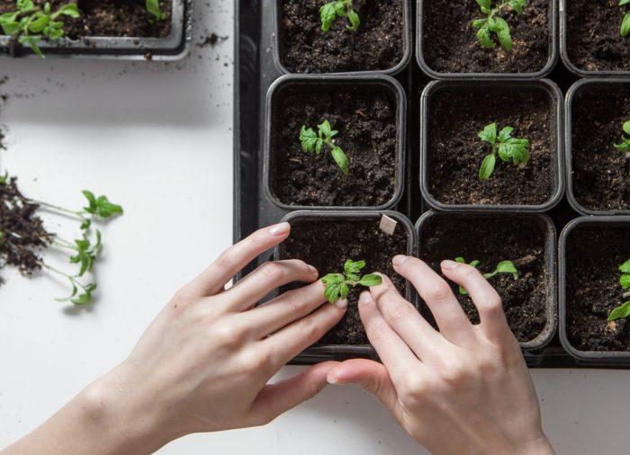 Doniczki do sadzonek – na co zwrócić uwagę przy zakupie?