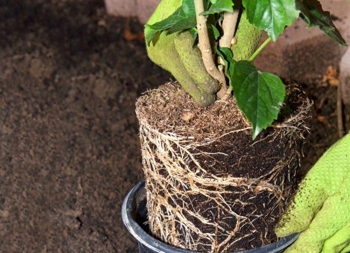 Ukorzenianie i klonowanie roślin – jakie akcesoria będą potrzebne?