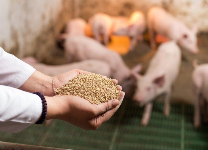 Rola aminokwasów w żywieniu trzody chlewnej